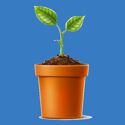 Planter à la maison